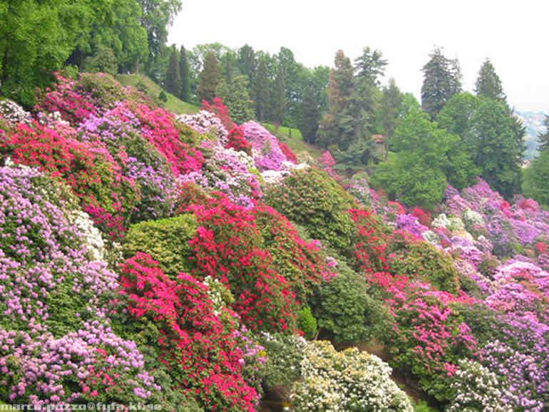 Giardini d 39 italia villa taranto verbania for Piante mediterranee da giardino