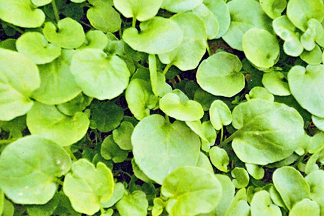 Le erbe del prato for Piante da sottobosco