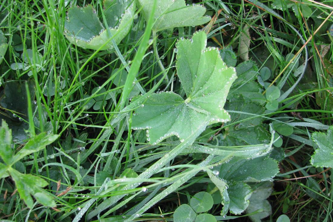 Le erbe del prato - Diversi tipi di erba ...