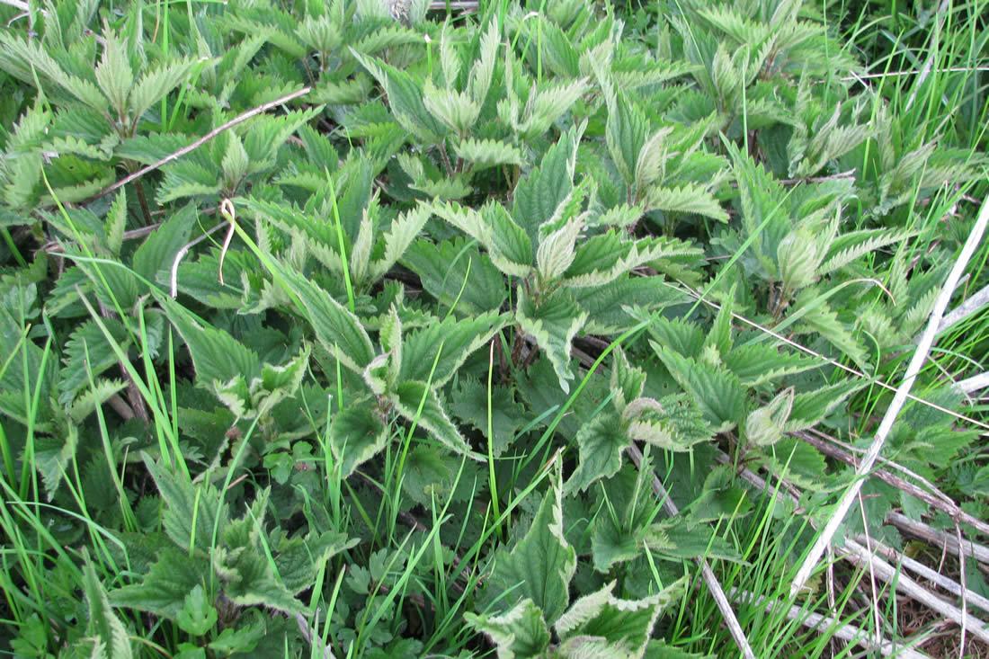 Le erbe del prato for Una storia a pianta aperta